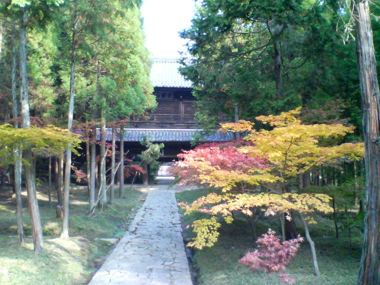 曹源寺の庭園散策